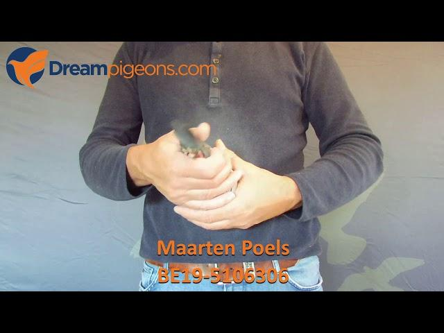 BE19-5106306 - Maarten Poels Auction Dreampigeons Video