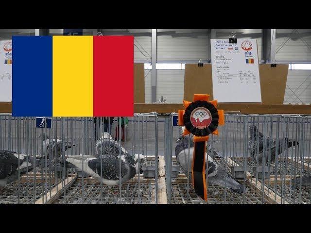 Romania, Rumunia - Olimpiada Gołębi, Pigeon Olympiad - Poznań 2019