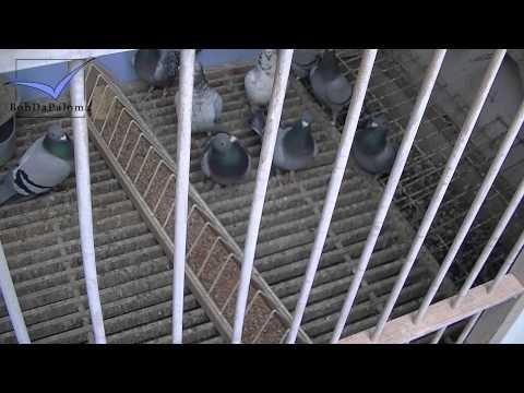 Yves Van De Poel [Racing Pigeons Loft / Taubenschlag / Palomar] (2013)