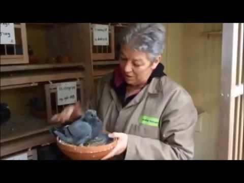 Joke Geven with her pigeons