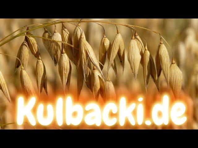 Owies uważany jest za jedno z najzdrowszych zbóż. 17.07.2020r.