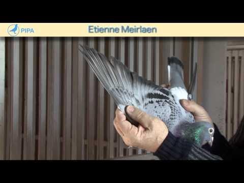 PIPA - Etienne Meirlaen Auction - De Asduivin