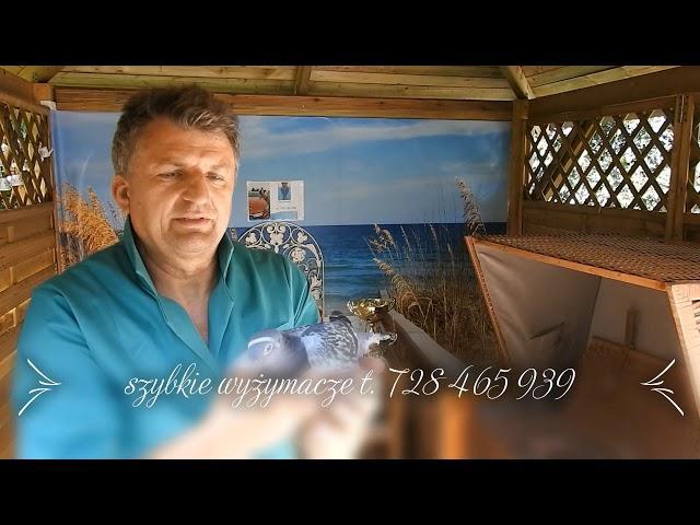Kup sobie zdrowe i szybkie gołębie tel. 728 465 939