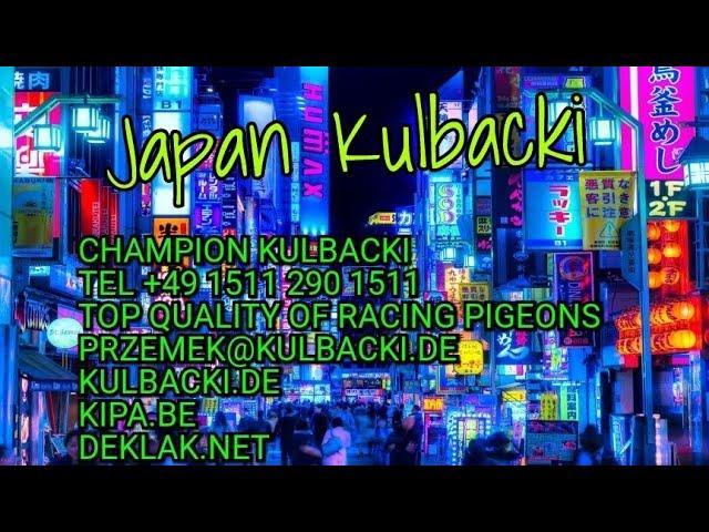 日本への毎週の発送 KULBACKI RACING PIGEONS SHIPPING JAPAN TOKYO tel: お電話+49 1511 290 1511