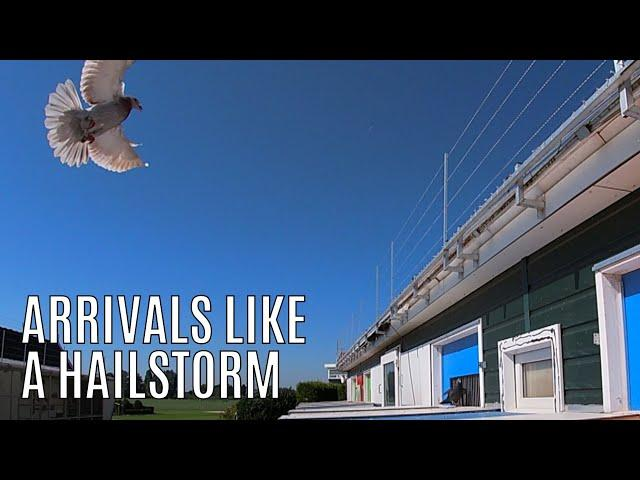 Vlog #73 AWESOME Arrivals Like A HAILSTORM