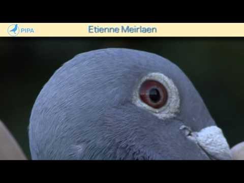 PIPA - Etienne Meirlaen Auction - Het Fenomeen