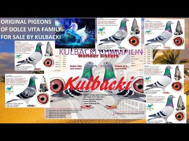 ORYGINAŁY DOLCE VITA I SAHARA NA SPRZEDAŻ zum verkauf for sale tel 0049 1511 290 1511