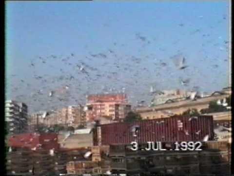 Barcelona International Pigeon Race  1992 1/2