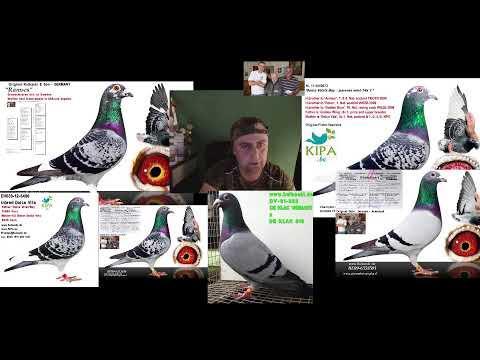 gołębie zdowe jak rydze stosuje MLEKO,SMOŁA,GRZYBY tylko originalne produkty NIESAMOWITE ZDROWIE!!!