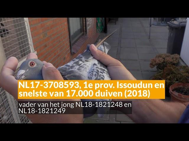 Online verkoop 13-24 november 2018 Mookhoek & Zn, Breskens (NL)