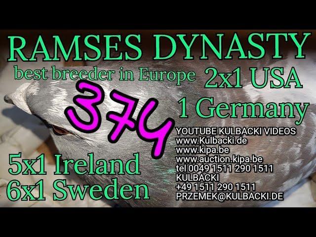 na sprzedaz wnuczka Ramsesa,(OJCIEC: syn Ramsesa x MATKA: champion 41 x dolce vita 250.000 euro)