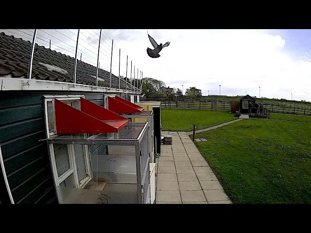 Vlog #29 Arrivals of our pigeons from Quievrain April 27th 2019