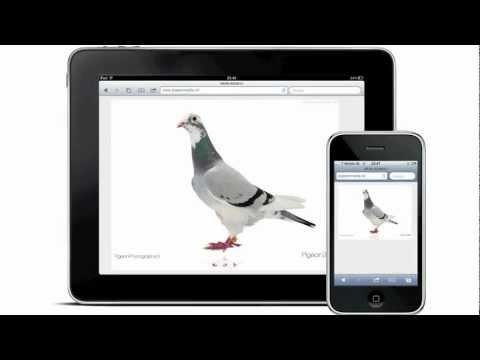 PigeonPhotography presents Pigeon360