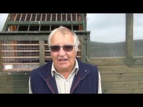 Video 329: Tony Swain of Dorchester: Premier Pigeon Racer