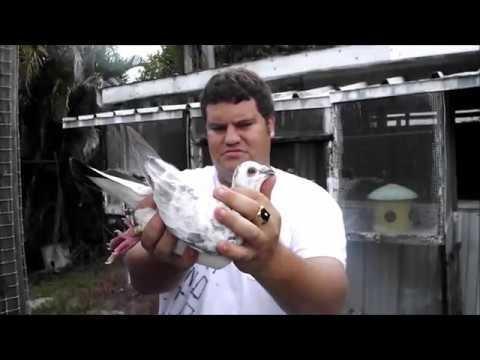 George + Sal Loft    Racing Pigeons + Tipplers + Combine Meeting