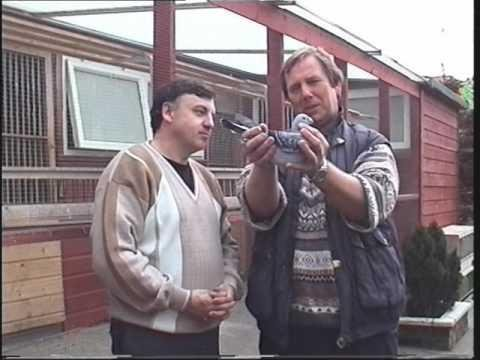 Video 163: Pigeon Loft Visits In Cumbria & Scotland 1997