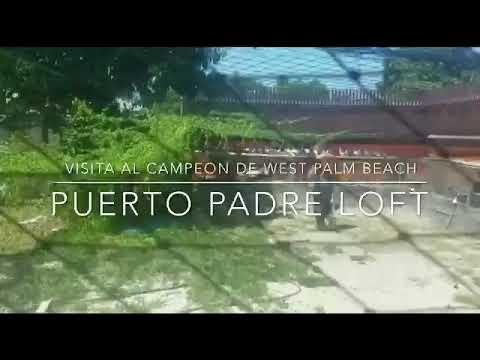 Raul hidalgo puerto padres loft,uno de los mejores palomeros de estados unidos parte #1