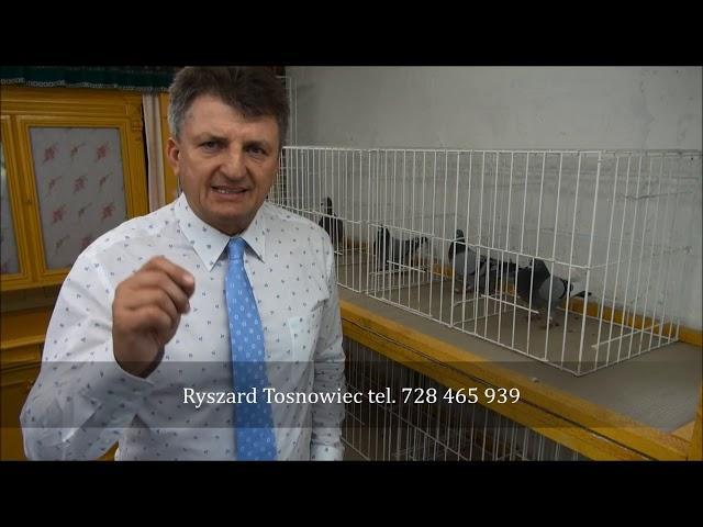 Triki w hodowli gołębi tel. 728 465 939