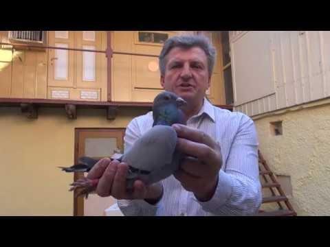 Ryszarda szybkie gołębie - Wyżymacze tel. 728 465 939
