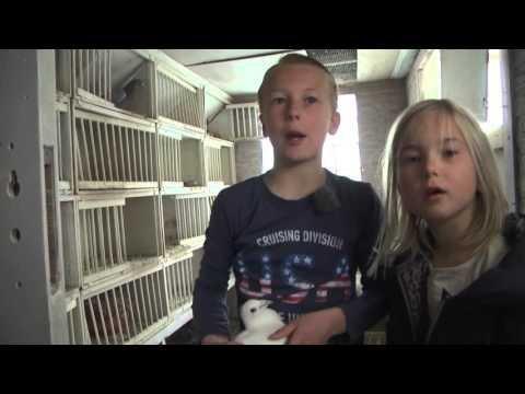 Reportage: Joe (9) is nieuw duivensport-talent (TV Enschede)