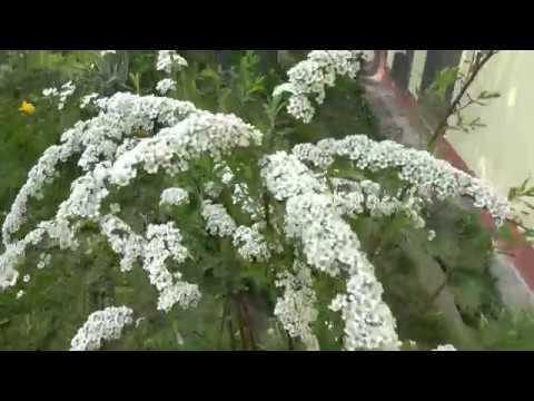 Mini ogródek z przybytkiem u Ryszarda  21 04 2018