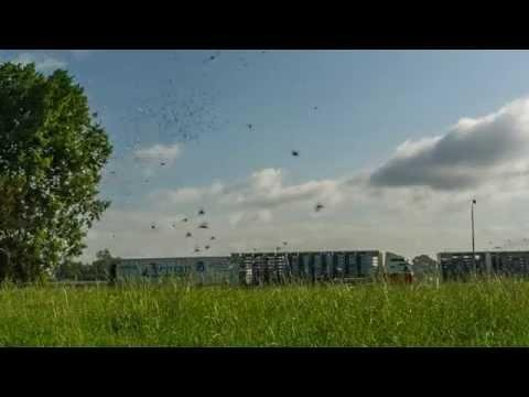 Intro PigeonPixels 2 - Lossing-liberation Ravenstein 2014