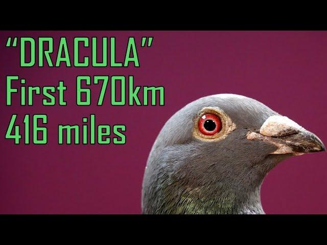 Vlog #59 DRACULA First From 670km