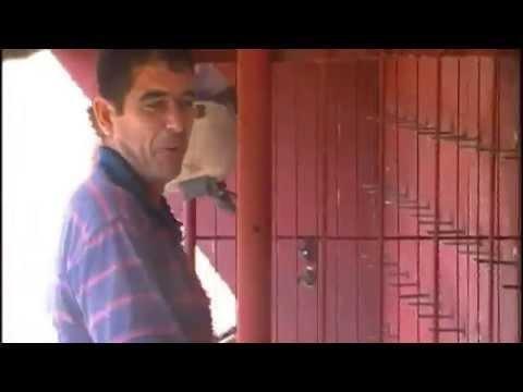 Building A Pigeon Racing Loft CUBA Perches And Design