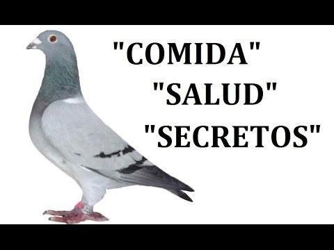 Cuidado de la paloma mensajera