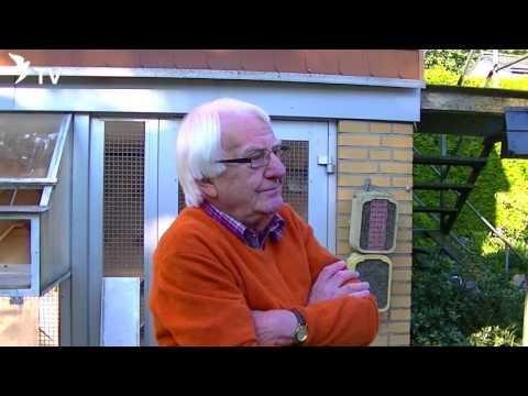 Wolfgang Roeper Interview Part 3/26 Krankheiten & Behandlung (Brieftauben)