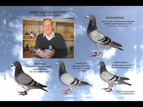 Video 367: Terry Haley of Watford (Part 2): Premier Pigeon Racer