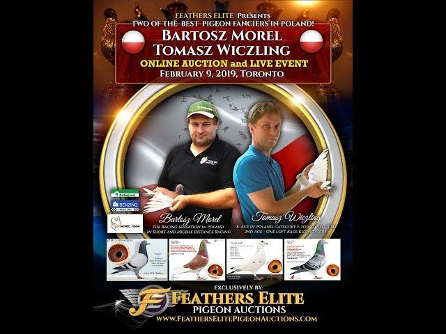Feather Elite Pigeon Auctions - Morel & Wiczling (Poland)