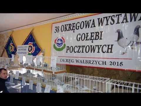 Pogawędki o gołębiach - tajemnice w sporcie odc.13/16