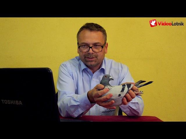 Gołębie rocznik 2018 - prezentacja na aukcje - Gregor Wichary Europapigeons Juwels cz.2