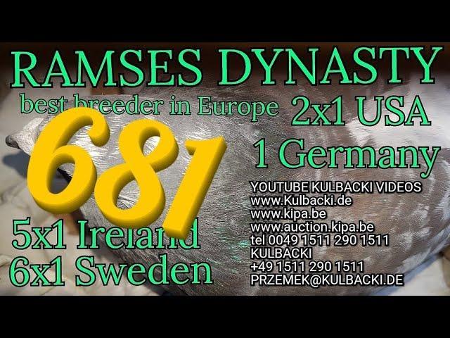 681,ojciec: RAMSES X CZERWONY VOS matka:RAMSES X STAMPARA JANSSEN, MOCNY INBRED NA RAMSESA 14x1 kon.