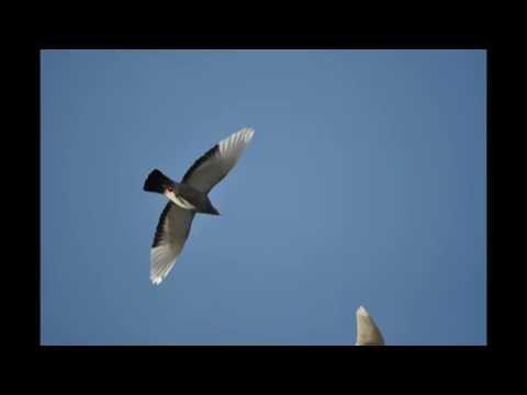 Gołębie w niebie , muzyka relaksacyjna ...6.