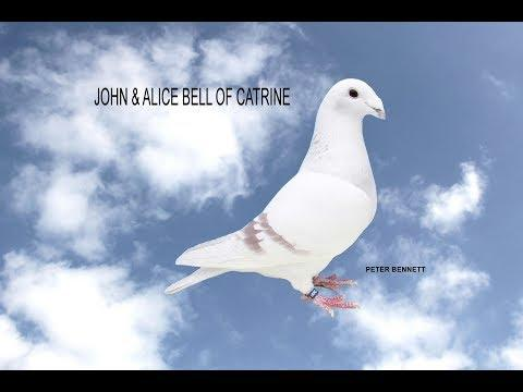Video 361: John & Alice Bell of Catrine: Show Pigeons