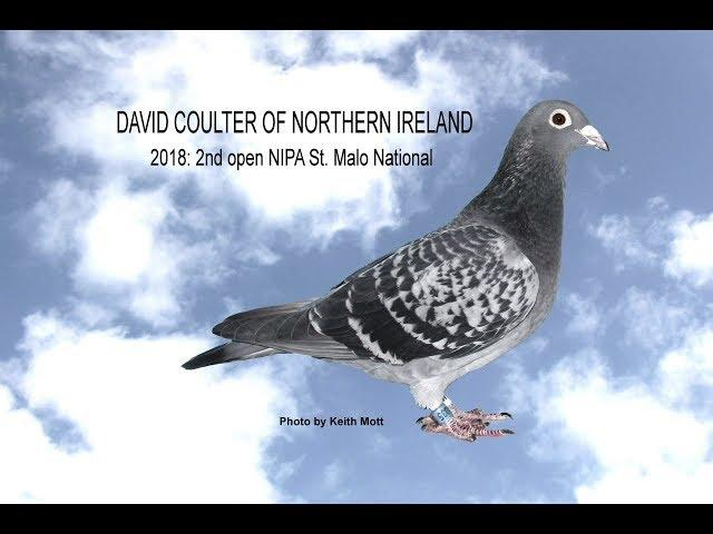 Video 382: David Coulter of Northern Ireland: Premier Pigeon Racer