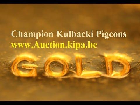 nowy gołąb Meulemans na aukcja.kipa.be KULBACKI COMPANY FOR PIGEONS RACE WhatsApp +49-1511-290-1511