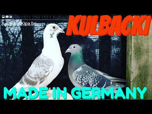 KULBACKI MADE IN GERMANY  TEL+4915112901511 DEUTSCHLANDWEITER VERSAND VON MEINER RASSE KULBACKI