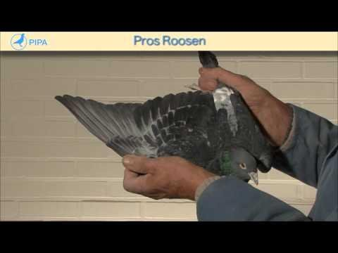 PIPA - Pros Roosen Auction - Chateauroux