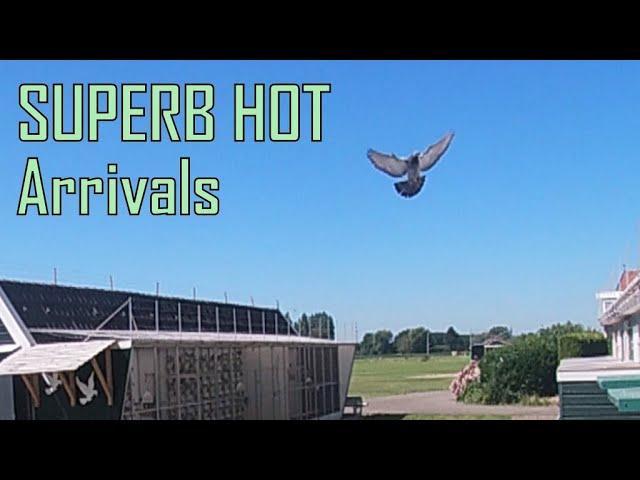 Vlog #53 SUPERB HOT Arrivals From 358km