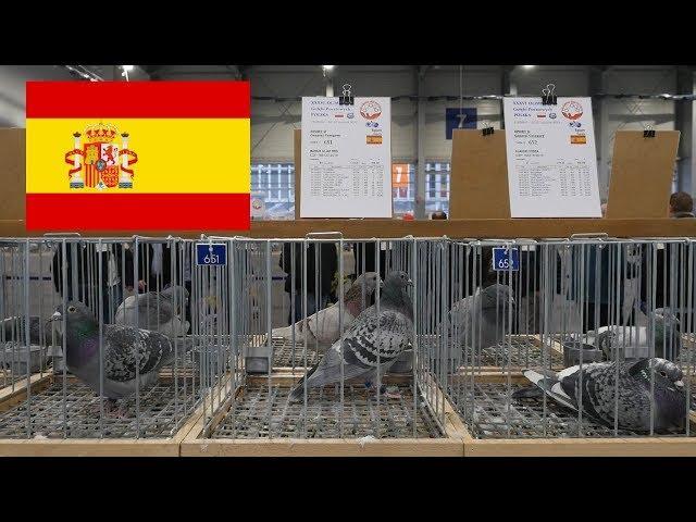 Spain, Hiszpania - Olimpiada Gołębi, Pigeon Olympiad - Poznań 2019
