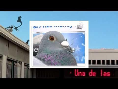 Arona-TENERIFE Pigeon Race 2012 - Car Race HOTSPOT-1 25th Feb 2012