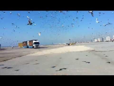 Barcelona Internacional Pigeons Race 2013
