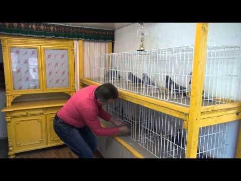Tajemnice szybkich gołębi - asy przestworzy .