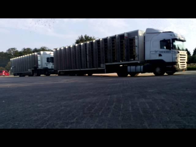 Duivenlossing Afd.10 5 t/m 8 Boxtel 27082016