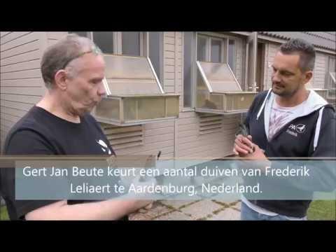 Internationale wedstrijd op Pau - Thuiskomst duiven Frederik Leliaert
