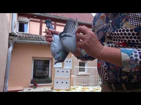 Dezynsekcja gołębi , porady Ryszarda tel. 728 465 939