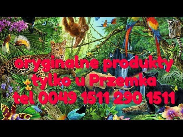Przemka produkty są najlepsze na świecie, oryginalne produkty życia tylko u Przemka wysyłki na dom